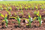 Cambios en la Encuesta sobre Seguros Agropecuarios que deben presentar las aseguradoras