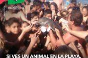 Fundación Vida Silvestre repudia a los turistas que manipularon a un delfín para tomarse una foto