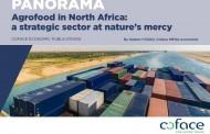 Sector agroalimentario es estratégico para la economía del norte de África